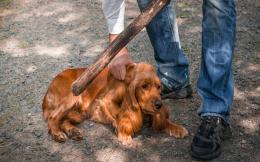 animal-abuse