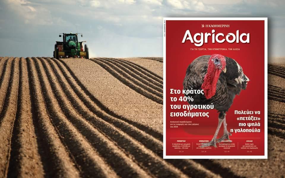 agricola-24-960x600