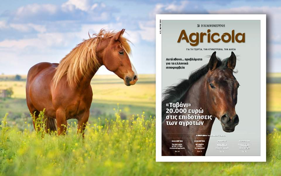 agricola-27-960x600