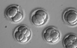 17s12genetic_fron