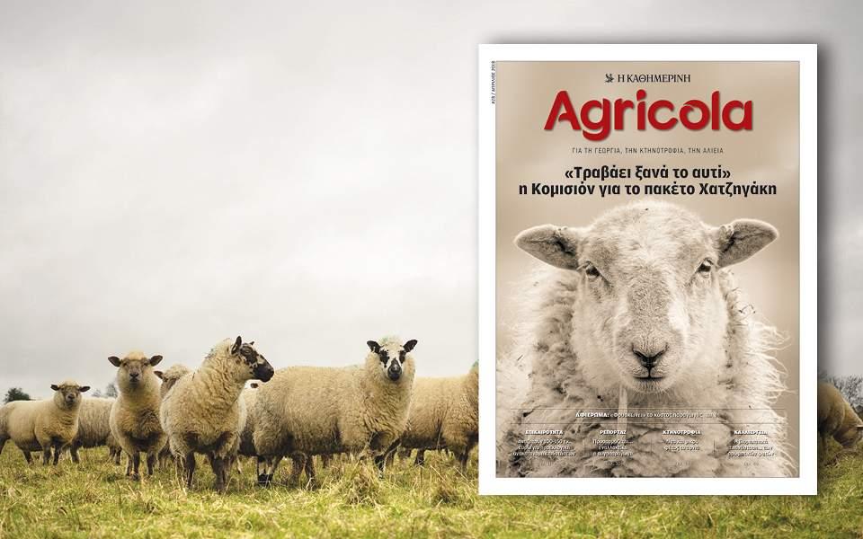 agricola-28-960x600-1