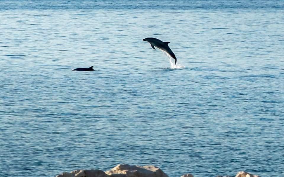 delfiniaistioploia