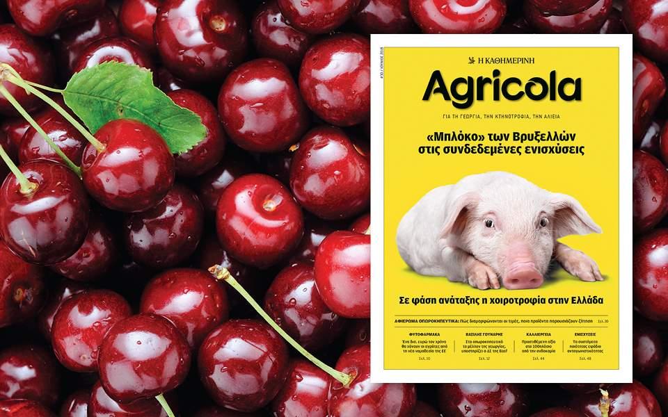 agricola-30-960x600
