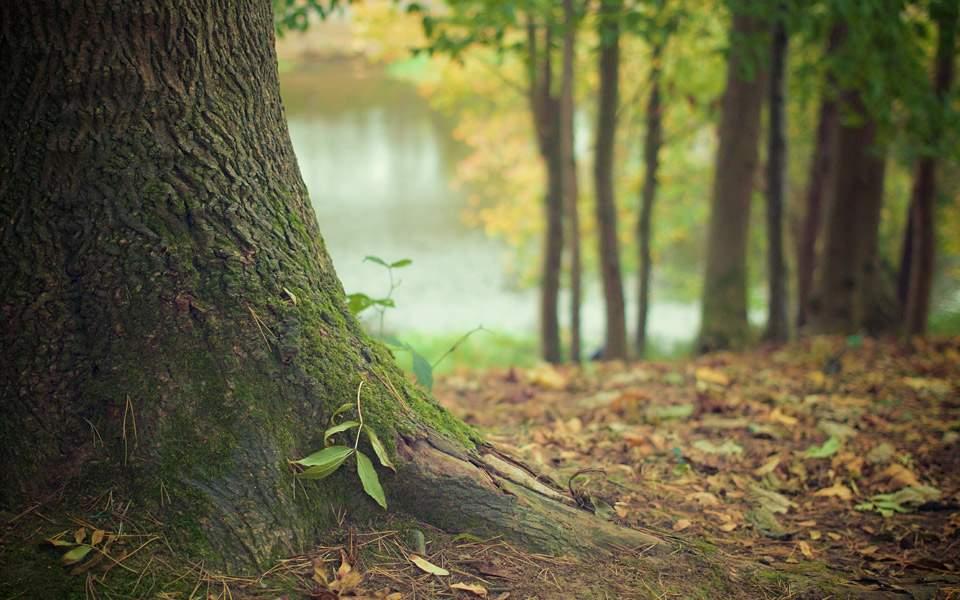 tree232130
