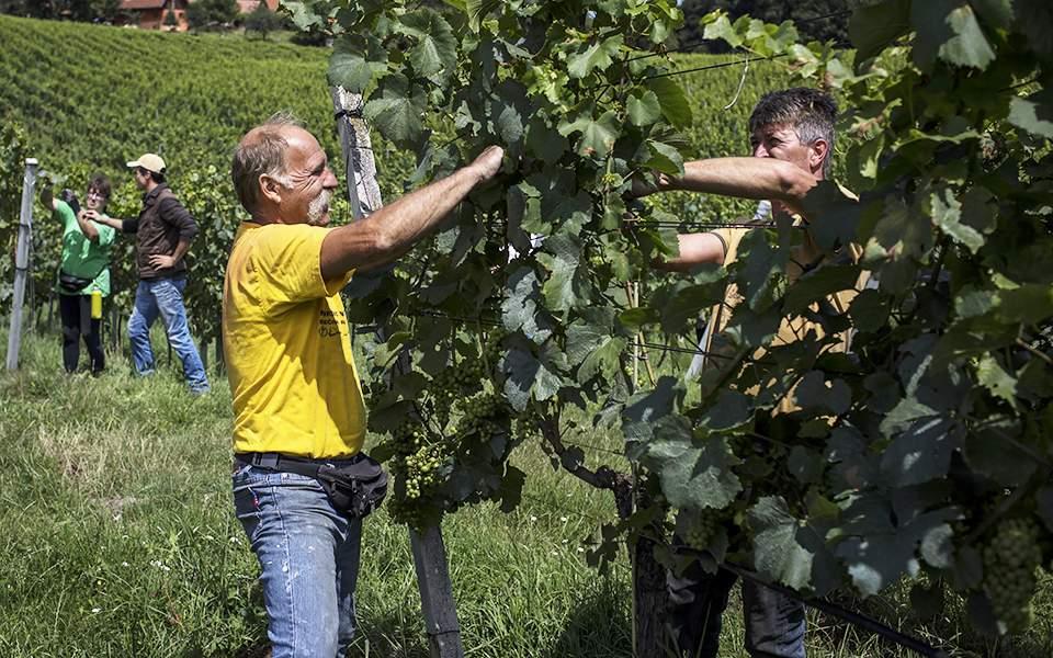 a-vineyard-i