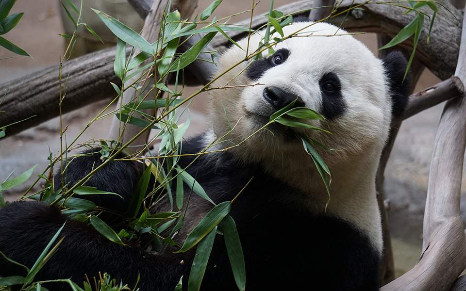 animal-bamboo-close-up-1123765