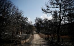 burnt-trees-