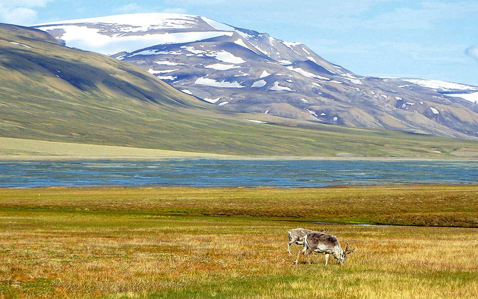 trollsteinen--nordenkjoldtoppen--hiorthfjellet-15