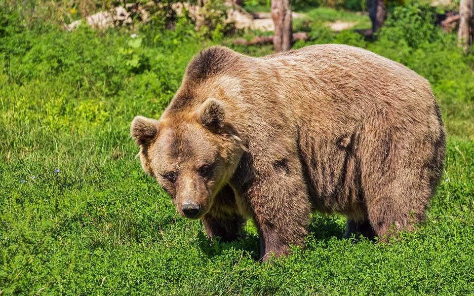 bear-422682_960_720