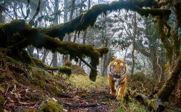 -emmanuel-rondeau---wildlife-photographer-of-the-year