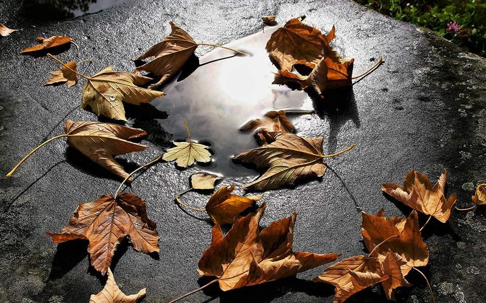 autumn-3648737_1920