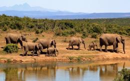 elephants323