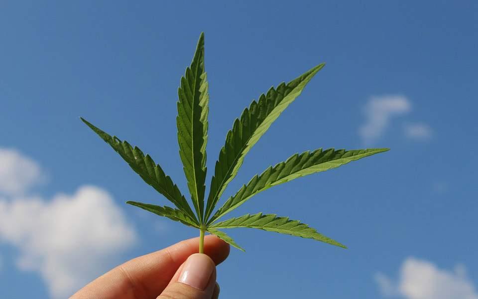 cannabis4564520