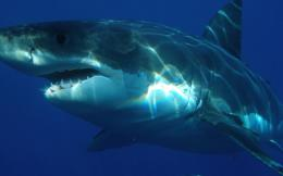 καρχαριας