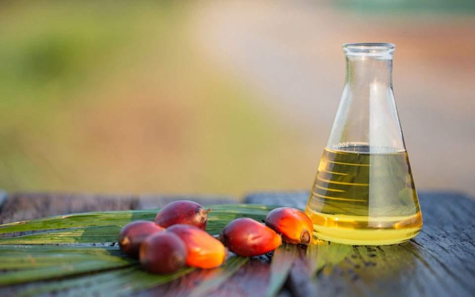 nor_palm_oil_154