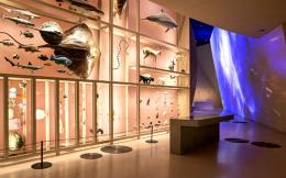 1-nationalmuseumofqatarphoto-danica-o-kus