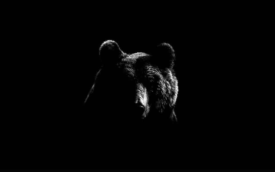 bear_722883493