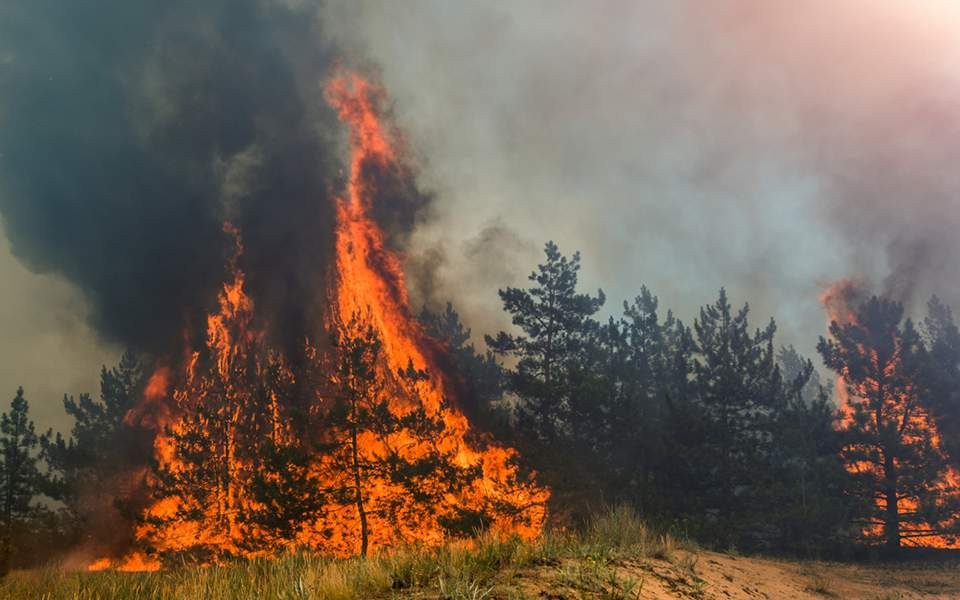 https://s.kathimerini.gr/resources/2019-08/forest-fire_768147307-thumb-large.jpg