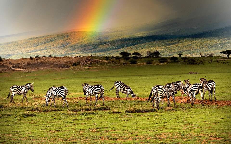 tanzania_kouri_ngorongoro