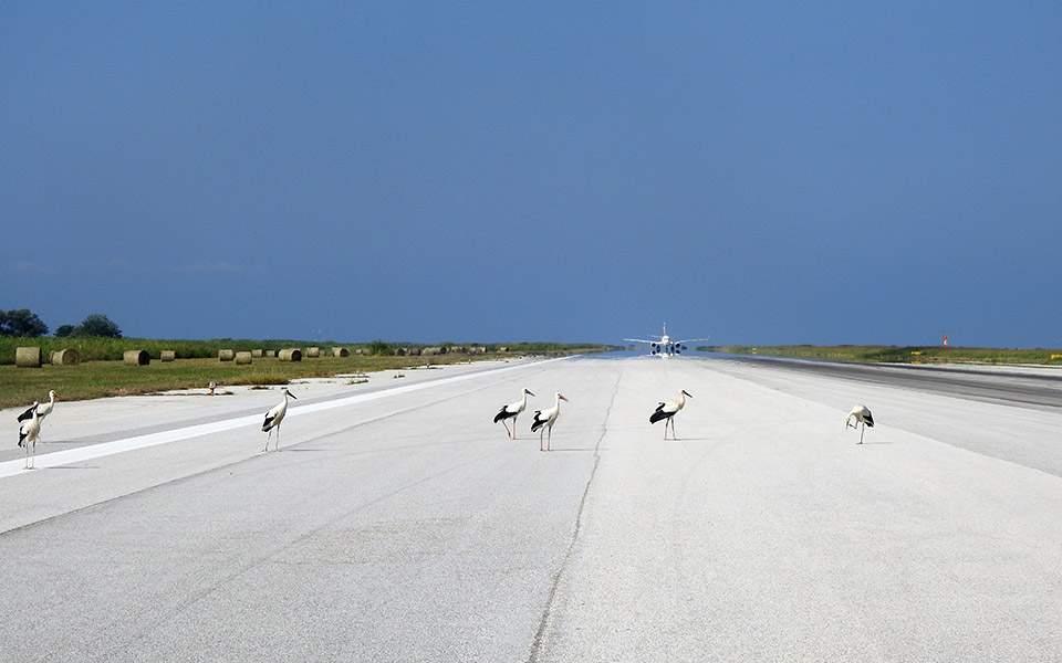 white-storks-agpe-edope_kva-airport_photo-by-kmiliadis-2