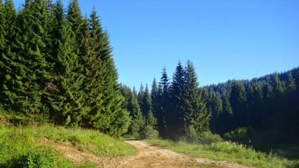 Προθεσμία για δασικούς χάρτες έως Σεπτέμβριο ζητεί η ΠΟΜΙΔΑ
