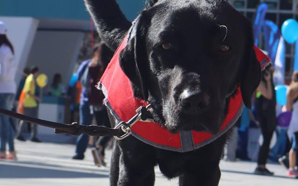 Πέθανε η Λάρα - Ήταν ο πρώτος σκύλος οδηγός τυφλών στην Ελλάδα 3