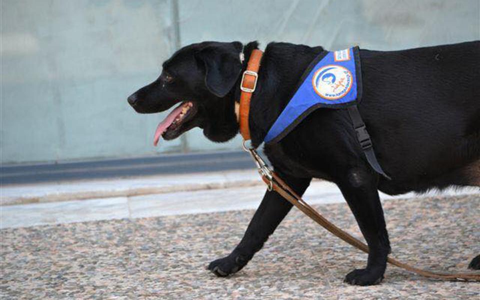 Πέθανε η Λάρα - Ήταν ο πρώτος σκύλος οδηγός τυφλών στην Ελλάδα 4